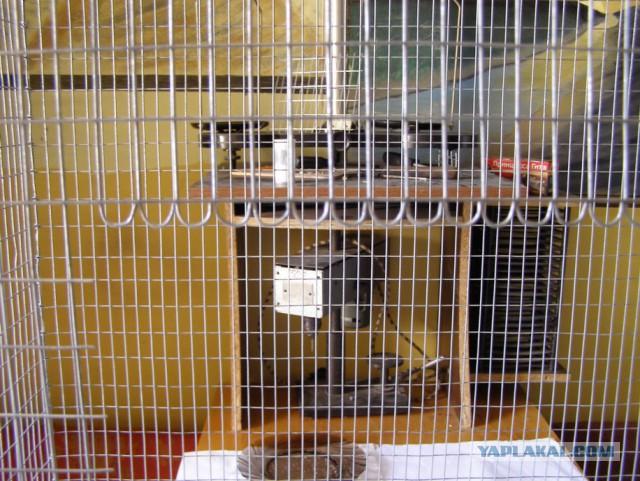 Клетка для попугаев своими руками