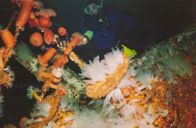 Искусственные рифы нашей планеты