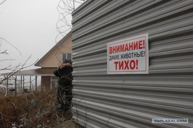 Как губернатор Ткачёв завел животных на даче
