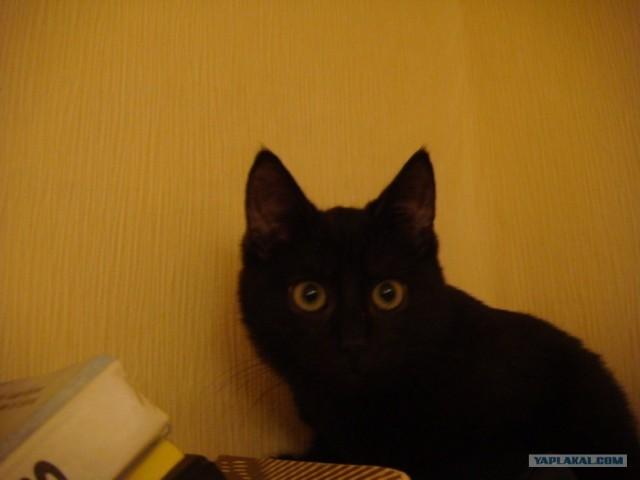 Бесноватый кот