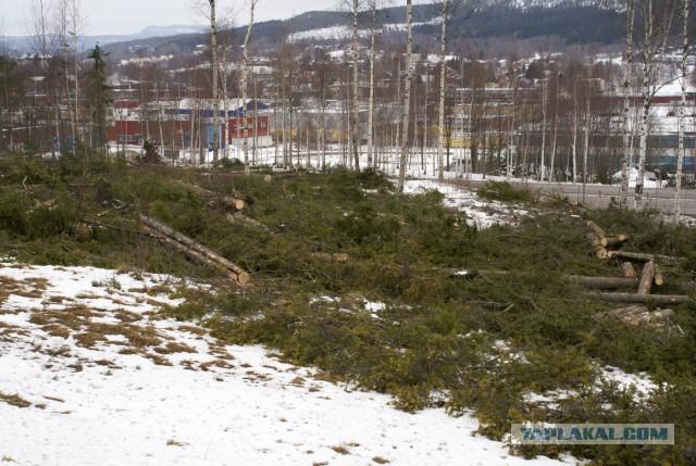 Зачем и как удобряют леса в Швеции