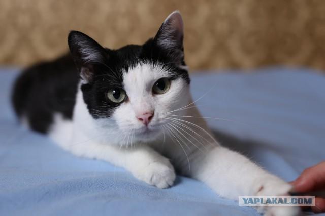 Кто может подержать у себя дома кошку за деньги? Москва