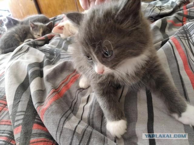 Котенок в добрые руки.