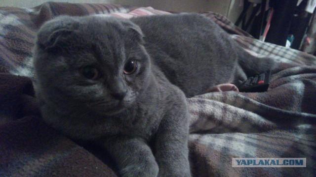 Кошка Япочка ищет кота!
