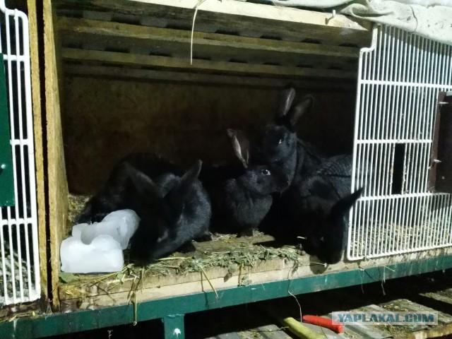 Мясо кроликов с доставкой. Челябинск.