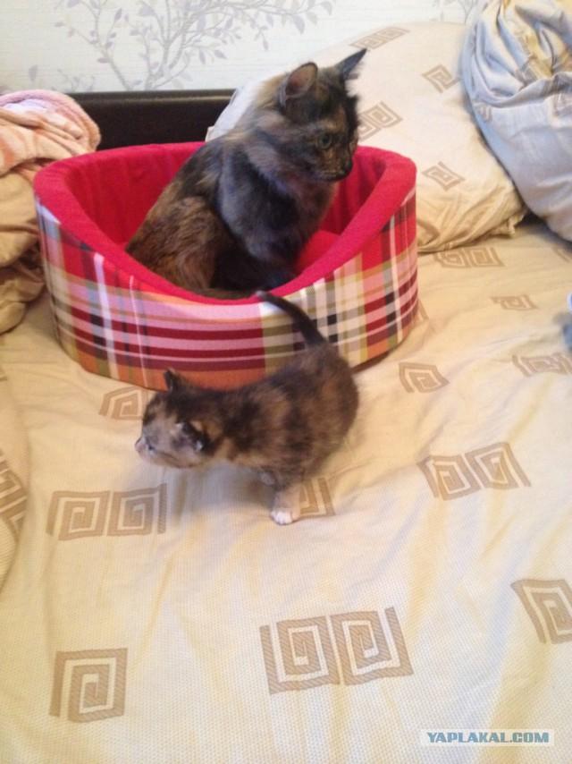 Отдам котят в хорошие руки (Москва)