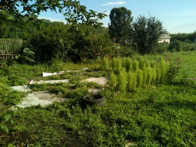 Купил участок в садовом обществе