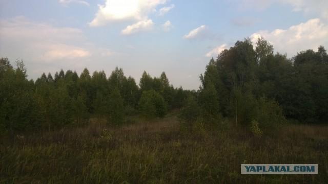 Грибопост или геноцид грибов в ярославской области