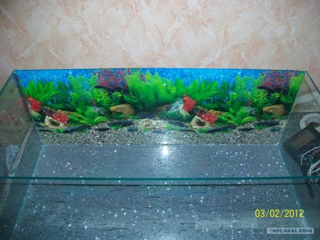 Закрепить картинку на аквариуме