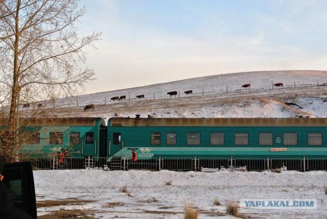 Есть ли жизнь в Монголии?