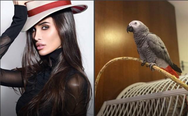 Жене футболиста Павла Мамаева продали дикого попугая за 152 тыс рублей.