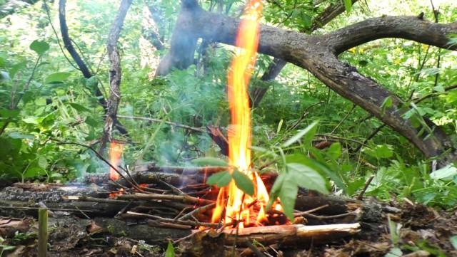 Выживание в лесу с женской сумочкой. Ночевка. Пробую готовить дары леса