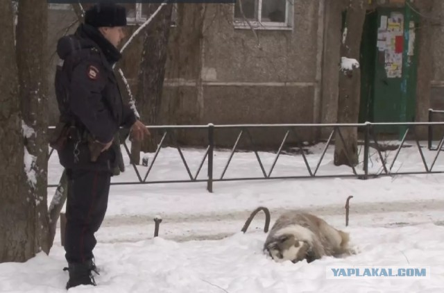 В Курске полицейские застрелили огромную собаку, нападавшую на людей