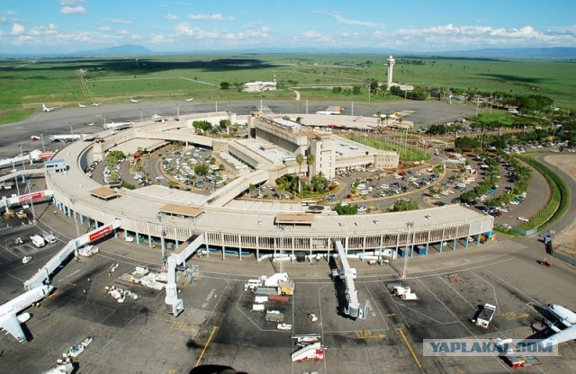 Семь самых известных жителей аэропортов