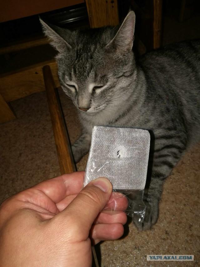 Кот вытянул неизвестную хрень