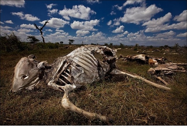 Кения, переживает не лучшие времена своей истории.
