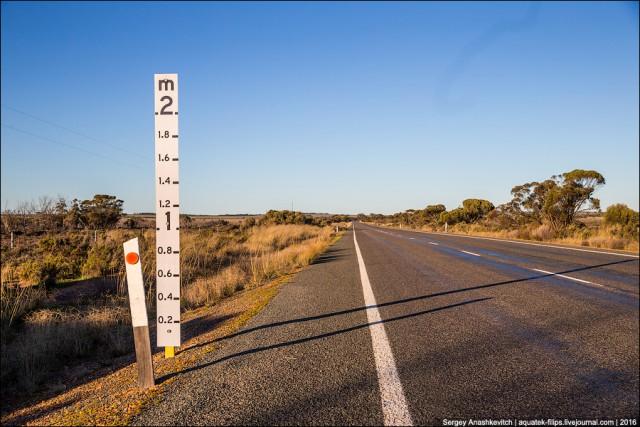 Зачем на австралийских дорогах ставят двухметровую линейку