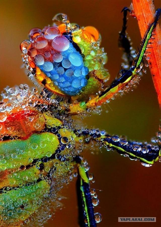 Необыкновенные и просто обыкновенные фото - Страница 4 11782067