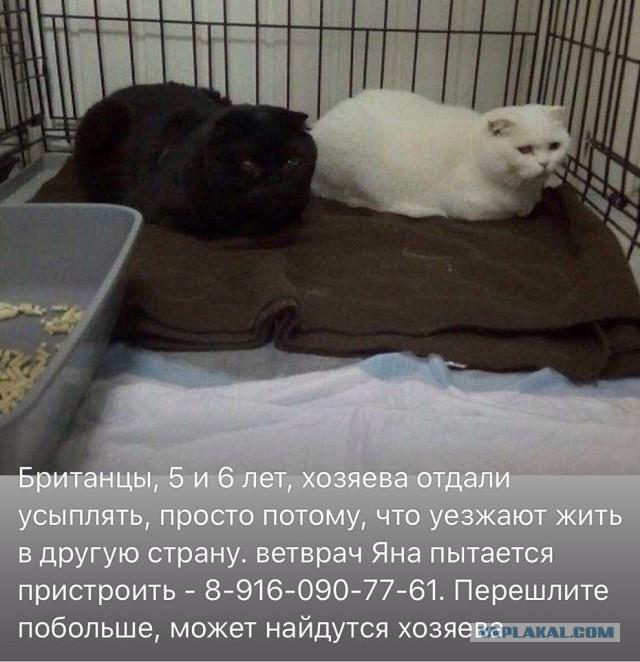 Прошу помочь пристроить котеек (Москва)