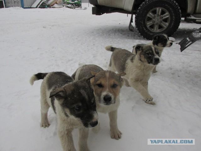 Помогите пристроить щенков