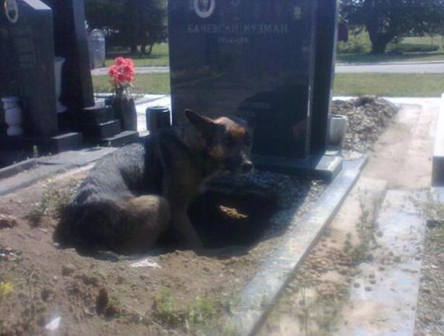 Все думали, что она хотела быть рядом с могилой хозяина, но когда присмотрелись…