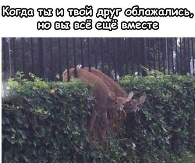 Когда твой друг - олень