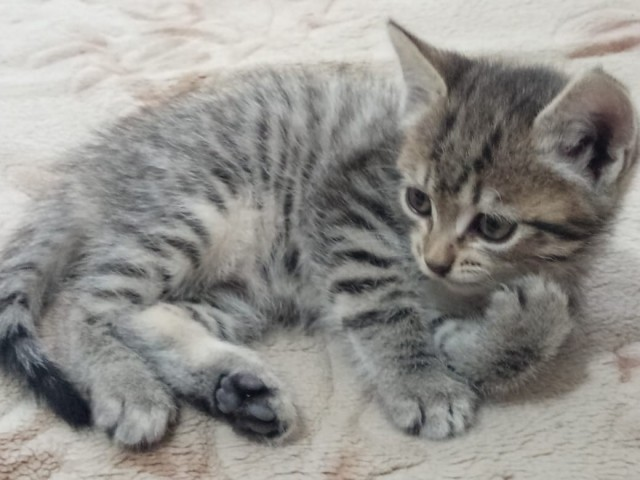 Котёнок в хорошие руки. Пездвоздмездно!