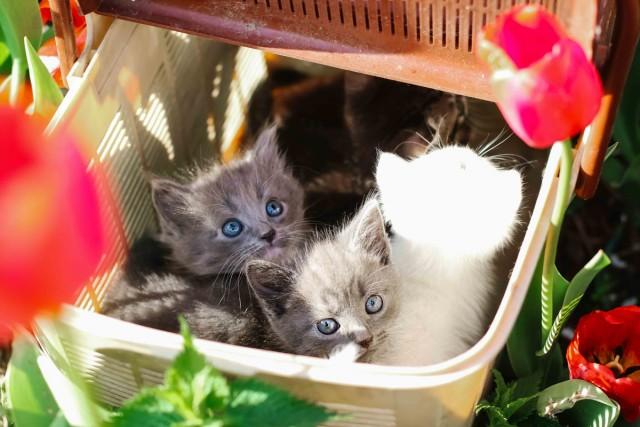 Только в хорошие руки замечательные котята