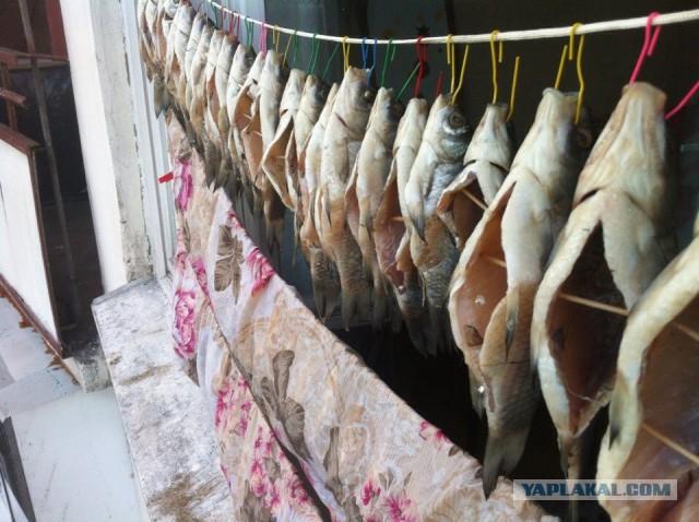 Как сушить рыбу в домашних условиях летом без мух 188