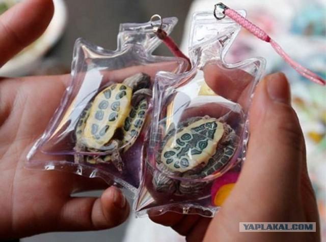 В Китае человечество продают их на виде брелоков (7 фото)