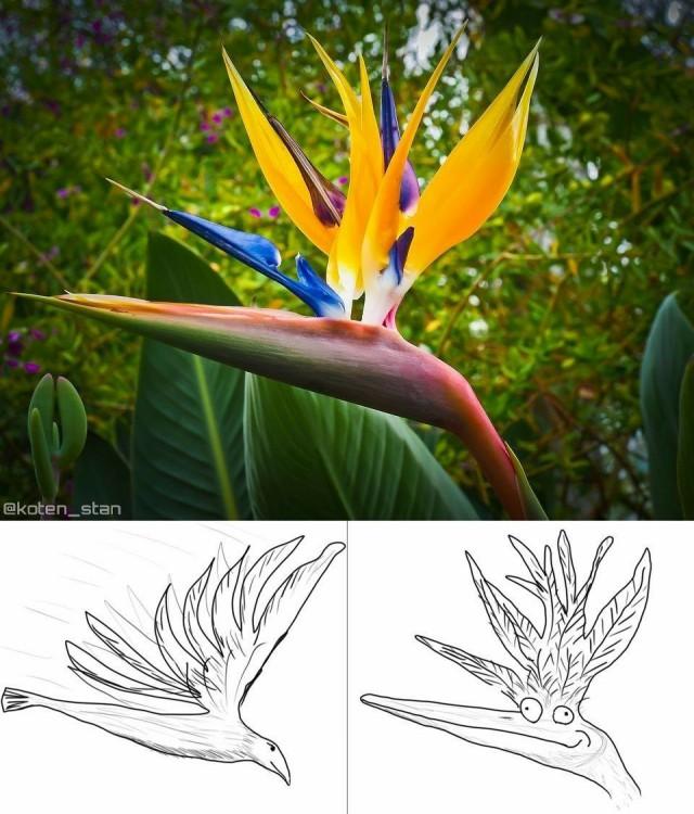 """Только сейчас понял, что это растение называется """"райская птица"""" из–за картинки слева, а не справа"""