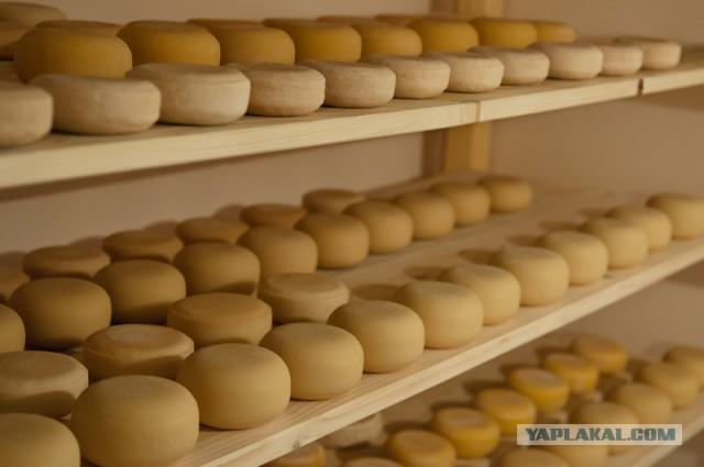 Сыр как делают