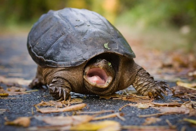 Врачи нашли в вагине британки мёртвую черепаху
