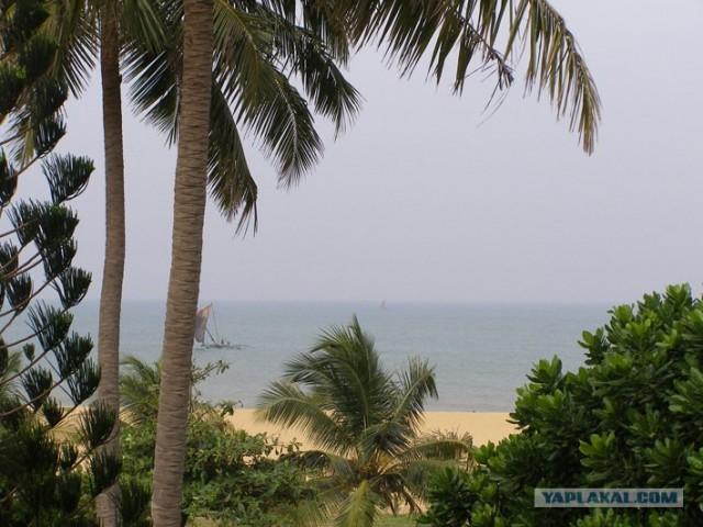 Срочно в отпуск! Шри-Ланка))) (27 пикч + инфа)