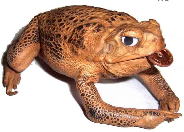 Сумка из жабы