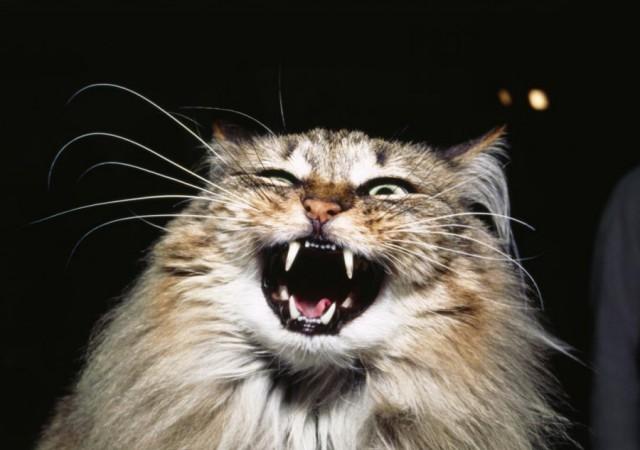 Новгородского должника выдал приставам собственный кот