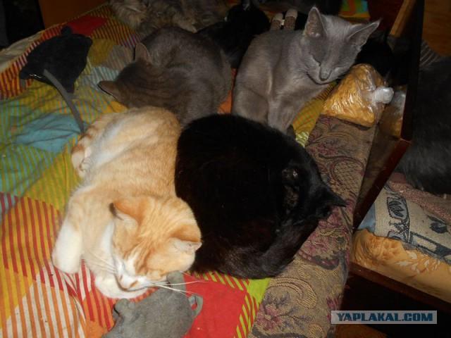 Жизнь домашнего приюта для котеек 136