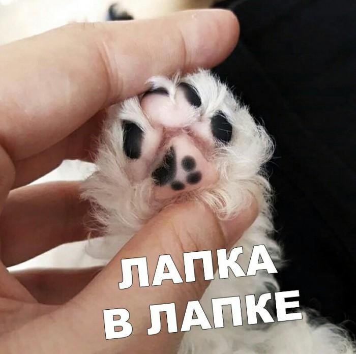 http://s00.yaplakal.com/pics/pics_preview/8/1/6/13433618.jpg
