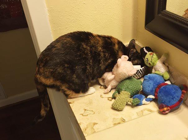 Моя прелесть: 17 котов-воришек