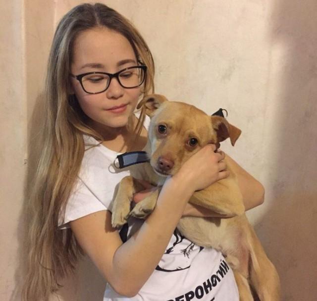 Такой ребёнок – один на миллион! 14-летняя школьница открыла собственный приют для бездомных собак