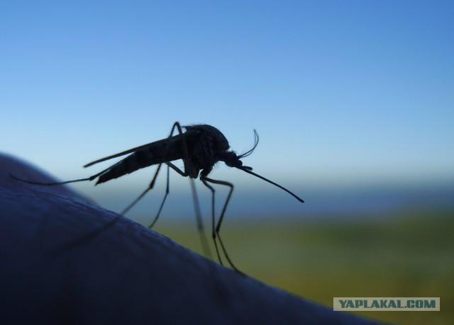 Почему комары кусают всех по-разному