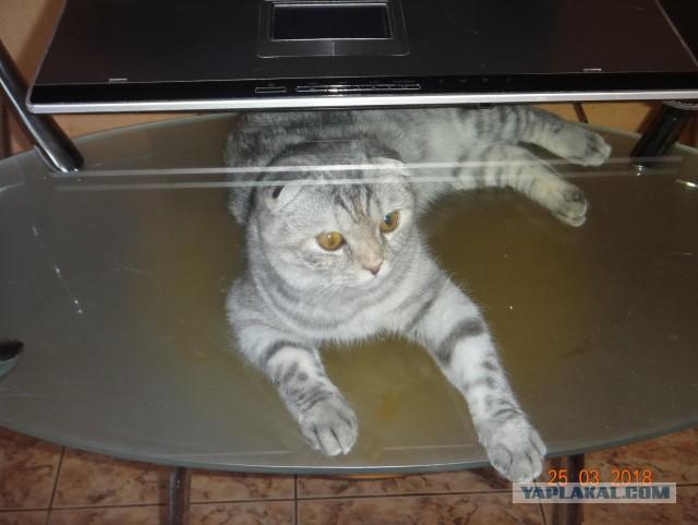 Млщная кошка ищет новый дом!