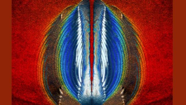 Секс долгоносиков, яйца бабочки и голова червя: 20 лучших снимков при помощи микроскопа