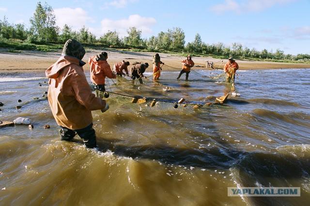 прогноз рыбалки надым