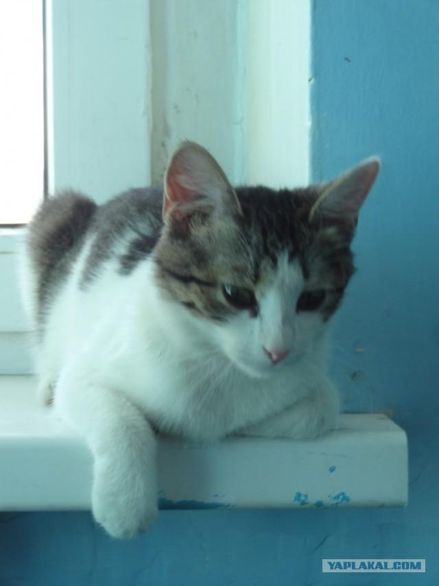 Кошечки ищут дом. Самара