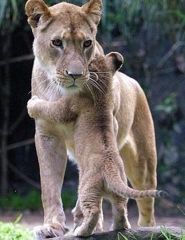 Животные: мамы и их малыши