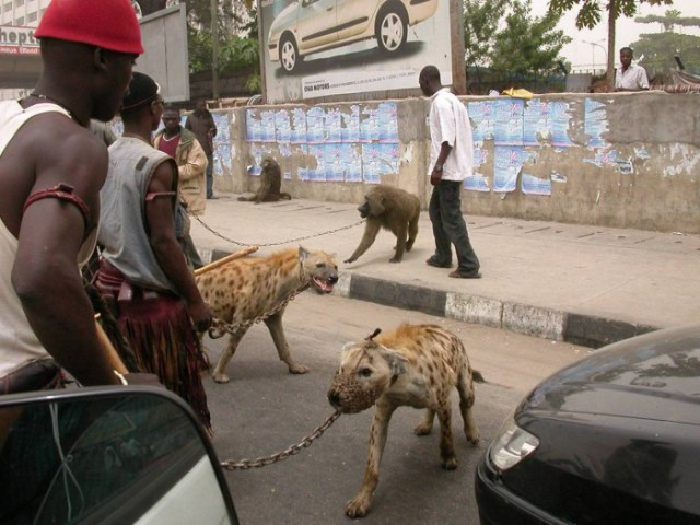 Такое увидишь только в Африке!