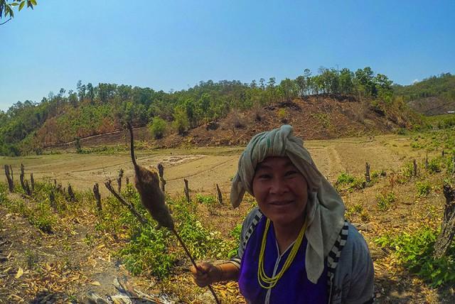 День труда в тайской горной деревушке или как я съел крысу