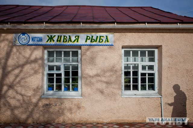 толстолобик в беларуси