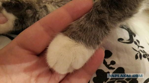 Недолог век домашнего кота